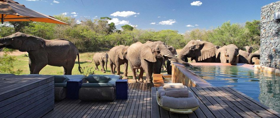 Phinda Forest Lodge - Hluhluwe - South Africa - PaperJet Travel